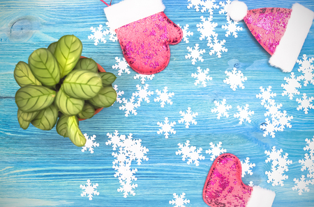 Arrowroot green plant snowflakes and Christmas fancy gloves on blue wooden background.