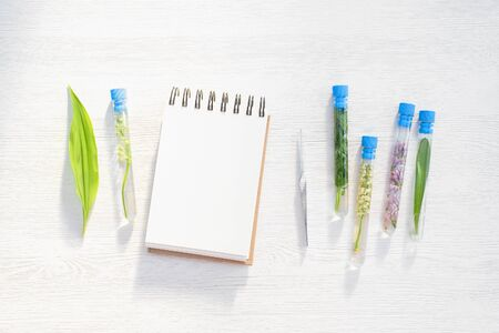 Different types of plants in the test tubes on white flat lay table background with copy space. Botany concept.