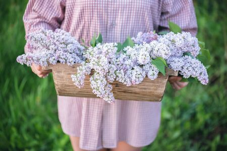 Gardener hands with bouquet of blooming lilac tree branches in old trough on green garden background.