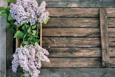 Blooming lilac tree branches in old trough on garden wooden table background.