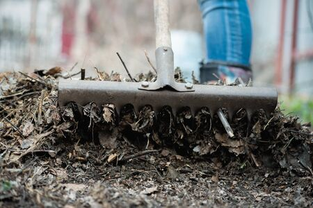 Woman is cleaning a fallen leaves with a rake close up.