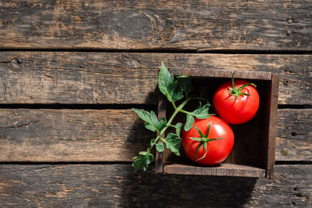 Raw tomato in a wooden box on garden table background with copy space.