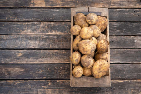 Raw potato crop in a wooden box on garden table background with copy space. Banco de Imagens