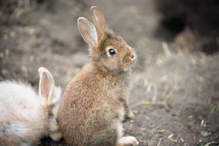 A two rabbits in the zoo close up.
