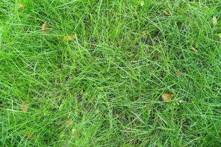 Green lawn grass texture background. Banco de Imagens