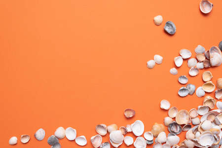 Heap of seashells on the orange flat lay background with copy space.
