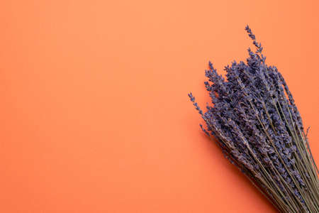 Dried lavender flowers on the orange flat lay background with copy space.