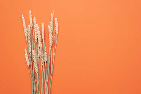 Bunch of wheat branches on the orange flat lay background with copy space. Stockfoto