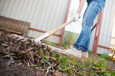 Gardener is cleaning the garden from a dried grass and leaves by the rake close up.