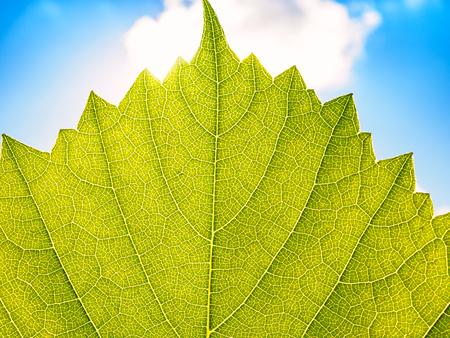 Leaves texture leaf background macro green light closeup Standard-Bild