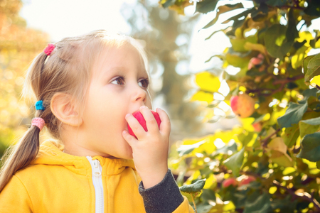 Little girl baby in yellow jumpsuit suit with blond hair gathers and bites off eats seasonal apples Harvesting in autumn garden Foto de archivo - 110714211