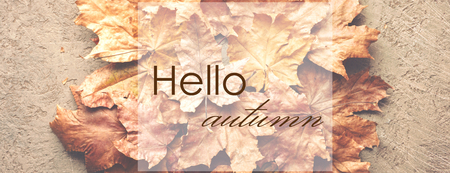 Hello Autumn Maple withered dried leaves Background withplace for text inscription Banco de Imagens