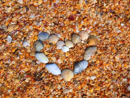 Heart and made of sea-shells on the sea-shells coast beach photo