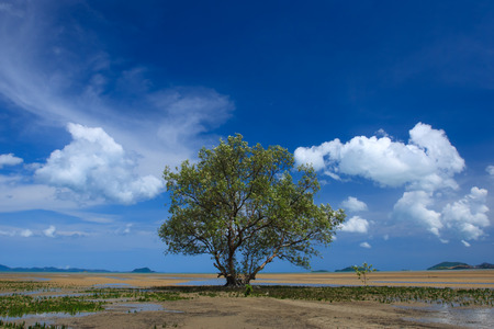 beatiful: Tropical Mangroves with beatiful sky Stock Photo