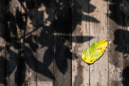 dried leaf: Dried leaf with tree shadow on old wooden walkway.