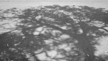 Schaduw van de boom op de weg. Zwart-wit toon.