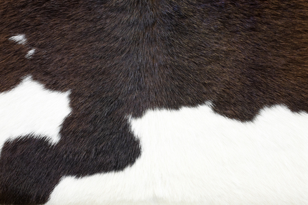 cowhide: Cowhide, cow skin background. Stock Photo