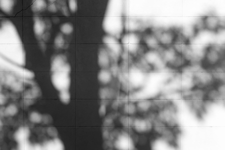 Shadow of tree reflected on the wall.