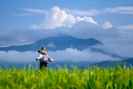 Scarecrow standing at green rice field against mountain and sky background. Reklamní fotografie