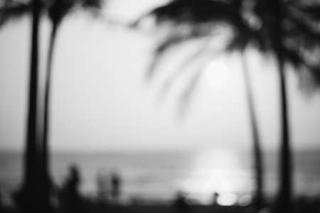Blurred coconut palm tree background on sunset. Black and White. Imagens