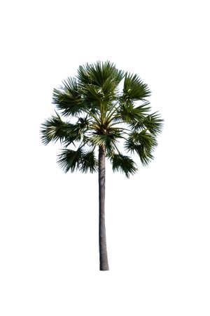 Palm tree isolated on white background. Imagens - 166063062
