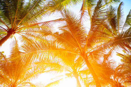 Coconut palm trees perspective view with sun light. Imagens