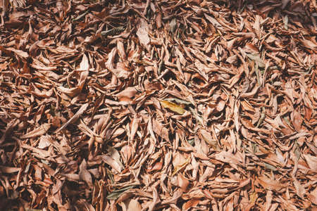 Top view of dry leaves on ground.