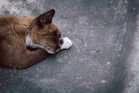Brown sick cat dying sleep on floor.