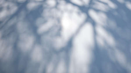 Abstract blurred shadow of tree on the hood of a white car. Top view.