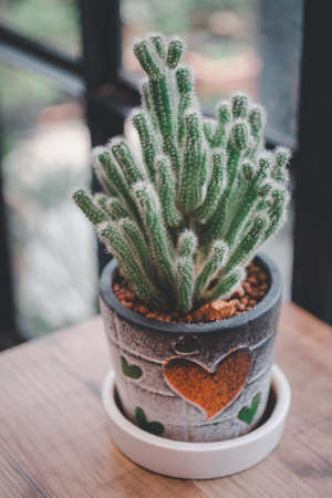 Small cactus plant in pot with heart sign on the wooden table.