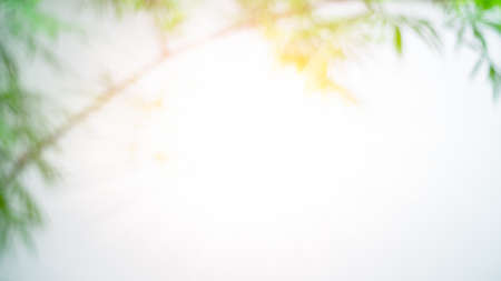 Blurred Bamboo leaves white background with sun rays. Imagens