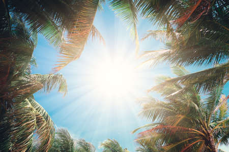 Coconut palm trees perspective view with sun rays. Imagens