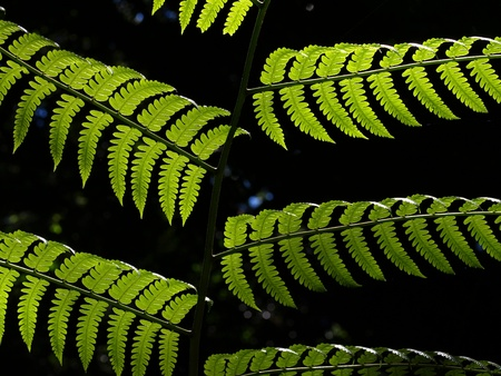 Backlit Fern Stock Photo - 11153474