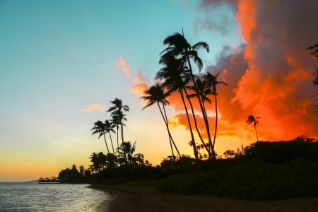 Colorful sunset with palm trees on beach in Hawaii