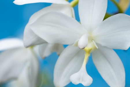 Macro of beautiful white orchid over water