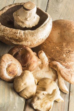 fungi: A group of assorted mushrooms, including portobello, shiitake and oyster mushrooms Stock Photo