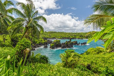 'palm trees': Waianapanapa State Park, home to a black beach, a popular destination on the Road to Hana on Maui, Hawaii Stock Photo