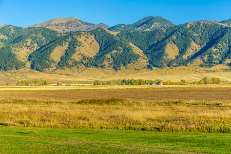 bridger: Beautiful autumn fields at the foot of the Bridger mountain range in Belgrade, Montana