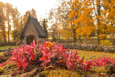 The old church between autumn trees and flowers in Sweden
