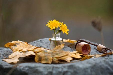romantic yellow flower in the garden Foto de archivo