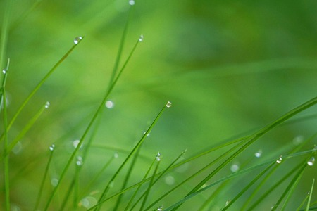 raindrops on the green grass plant in the garden Stock Photo