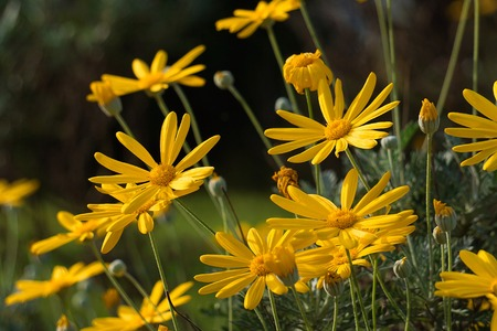 beautiful yellow flower in the garden in the nature