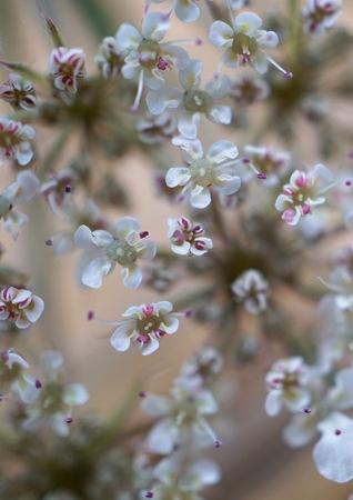romantic white flower in the nature Foto de archivo