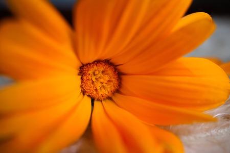 romantic orange flower in the garden Foto de archivo