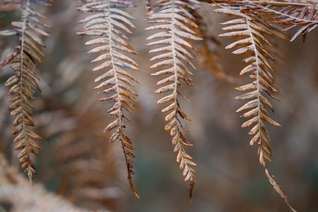 abstract brown fern plant leaves texture in the nature