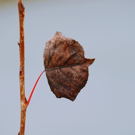 beautiful abstract brown tree leaf in the nature