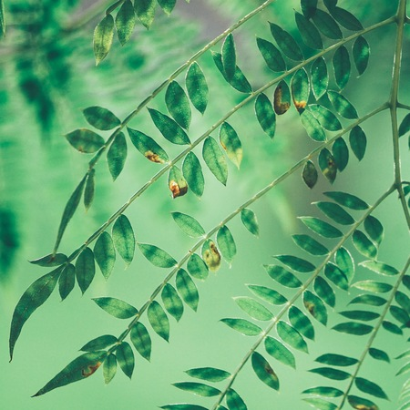 abstract green tree leaves in the nature Stock Photo