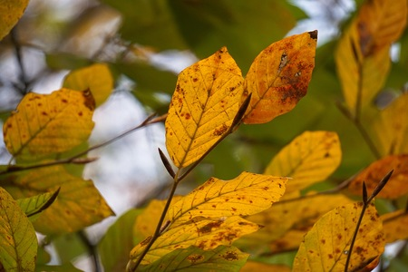 colorful tree leaves in the nature