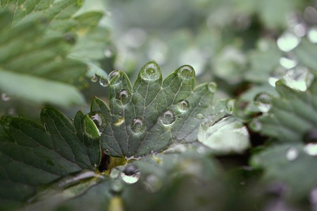raindrops on the green plant leaves in the nature