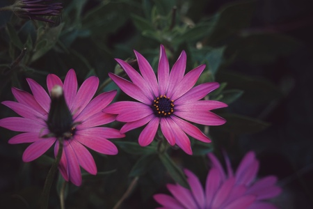 pink flower plant in springtime